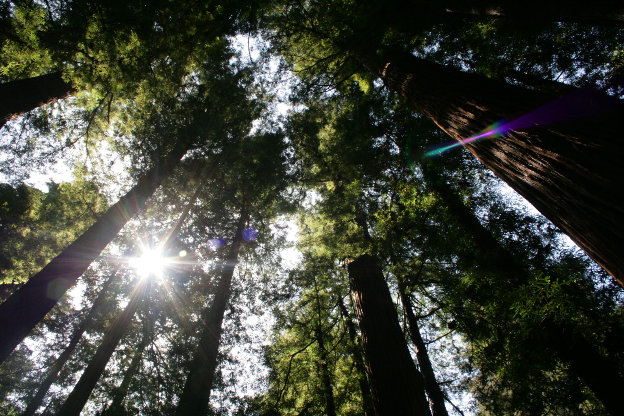 Real Estate Connect's forward-thinking, redwood grove, lamb roast beginnings