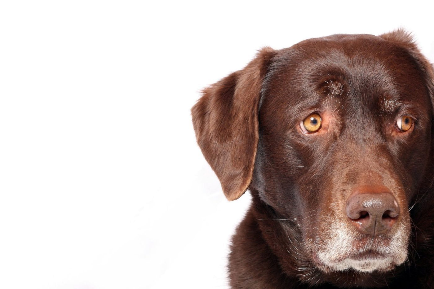 Why has the dog not barked? Quieter, wiser heads are worried about our economy
