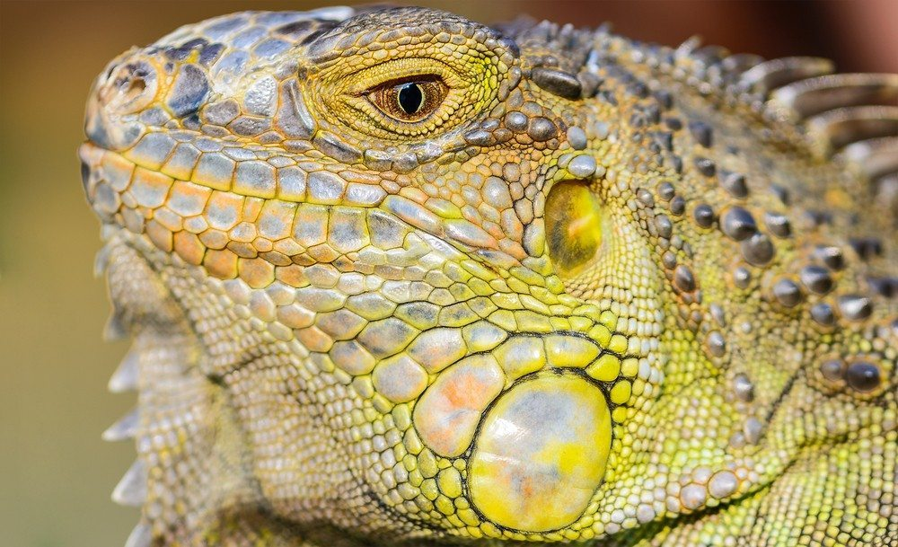 Tap into your clients' reptilian brain to learn what they really want in a house