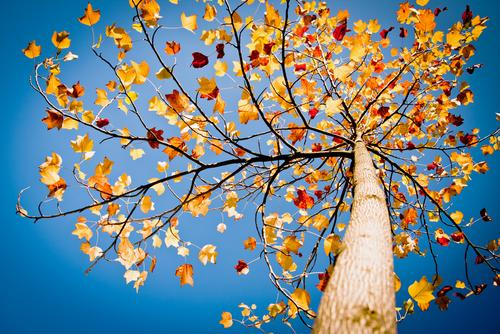 5 steps to gear up for the fall selling season