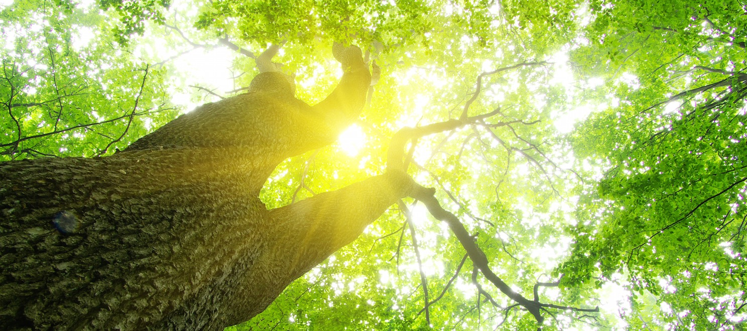 What are you contributing to the real estate ecosystem?