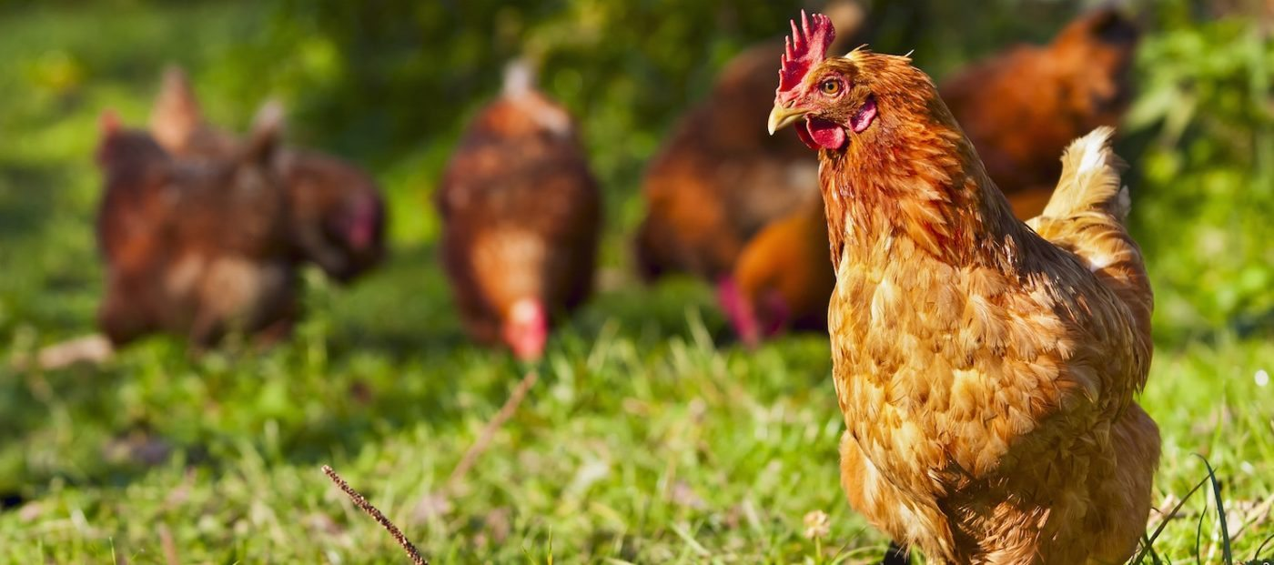 Zillow Group's game of 'chicken'