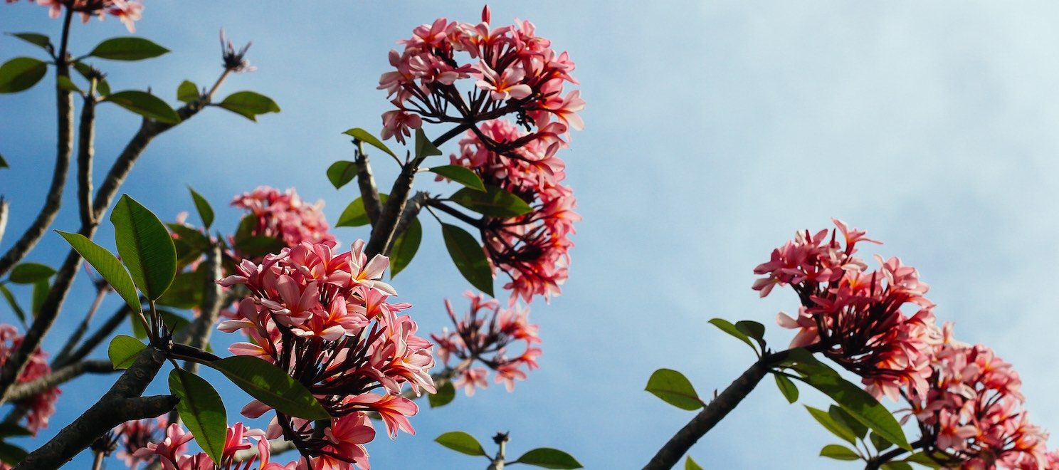 Spring blooms with lower mortgage rates