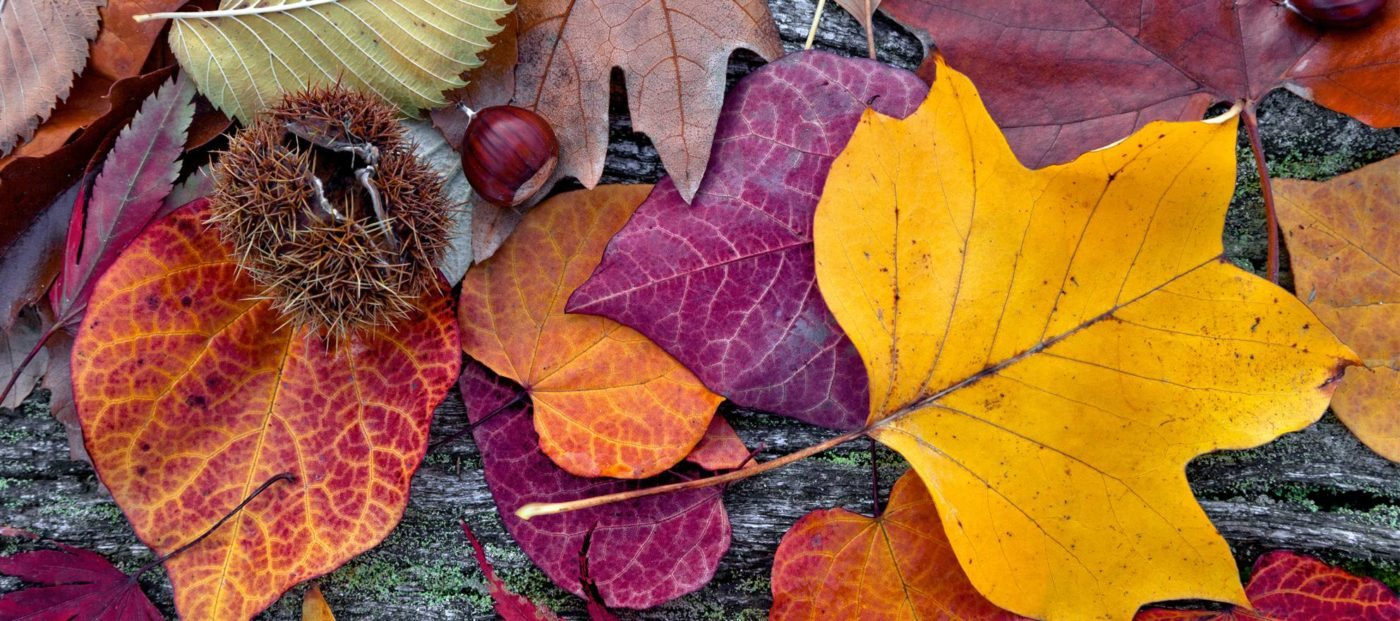 3 ways to engage past clients this fall