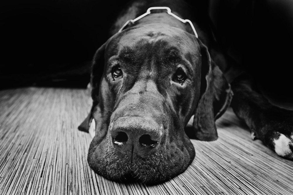 LovelyColorPhoto / Shutterstock.com