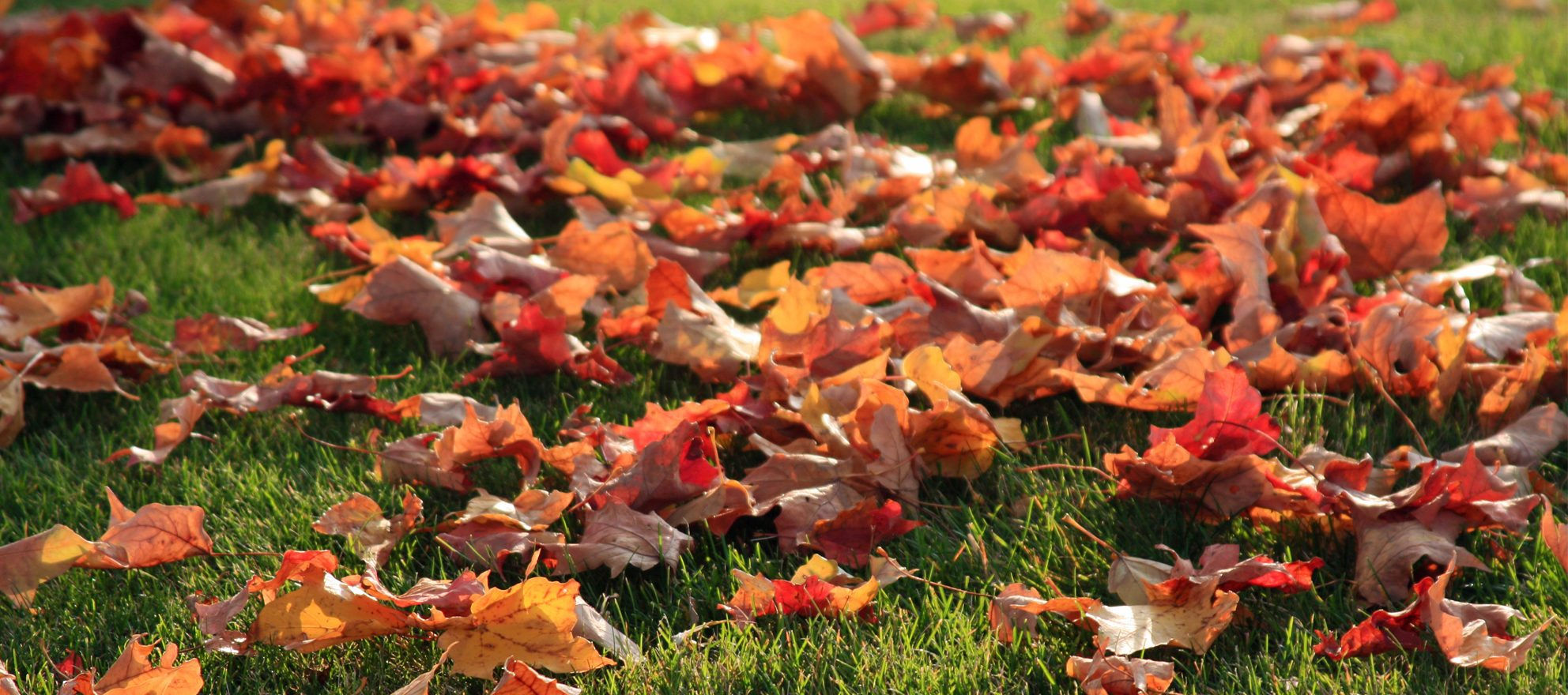 Why is fall the best time of the year for Chicago homebuyers?