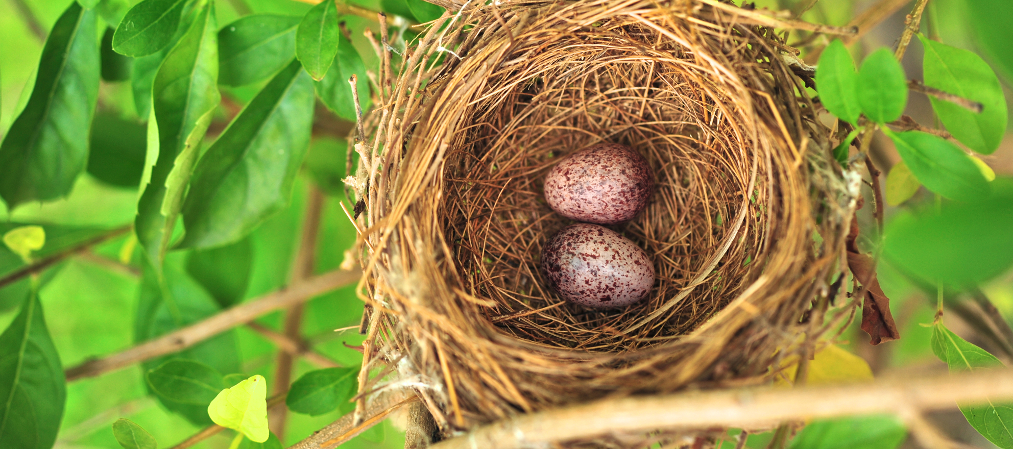 Houston named best city for building a nest egg