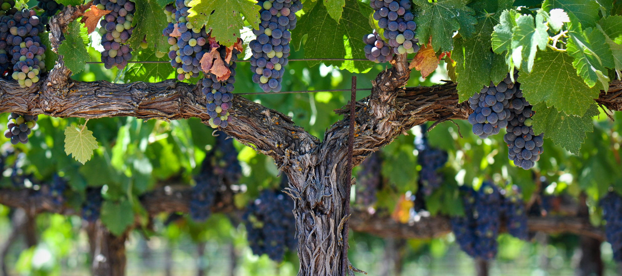 Funding platform enters wine country