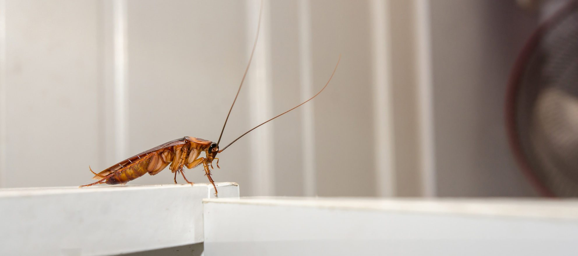 cockroach startup