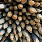 An array of wooden spikes