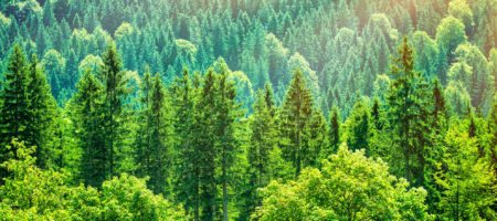Why being a Realtor means you should be a conservationist