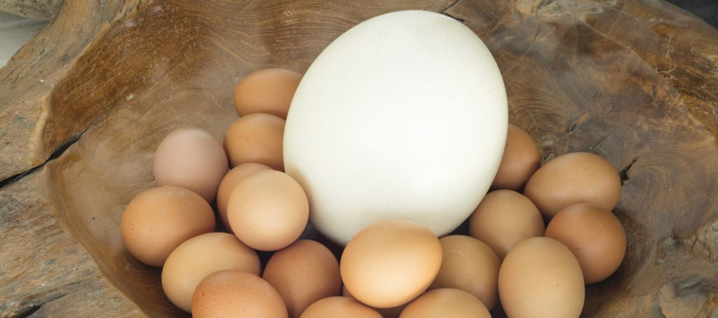 A large ostrich egg among smaller chicken eggs
