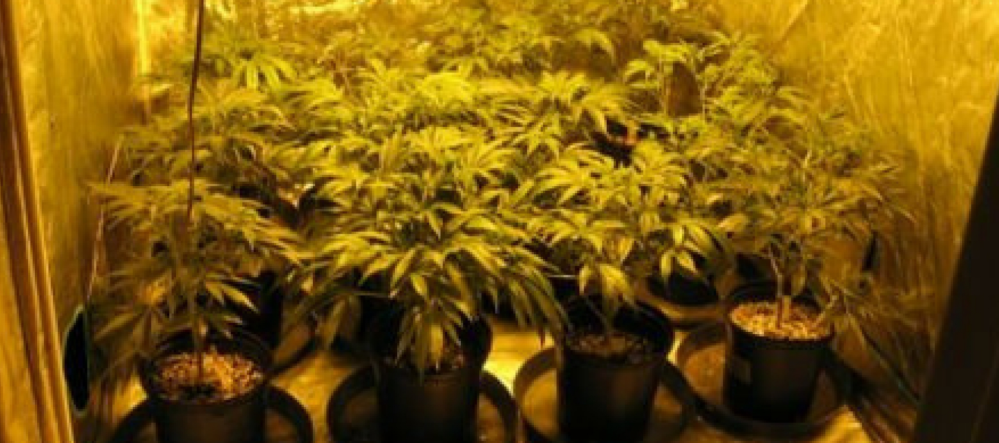 pot legalization real estate