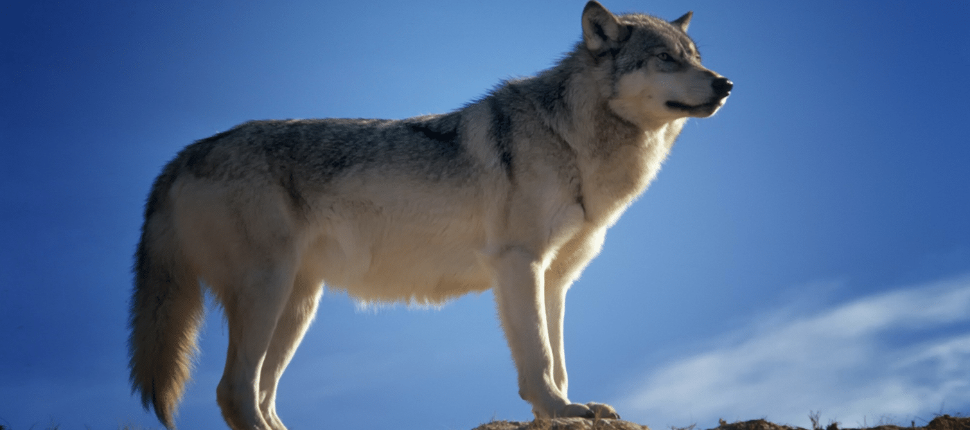 Lone Wolf Technologies