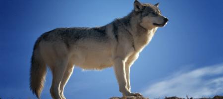 Lone Wolf launches transaction management platform