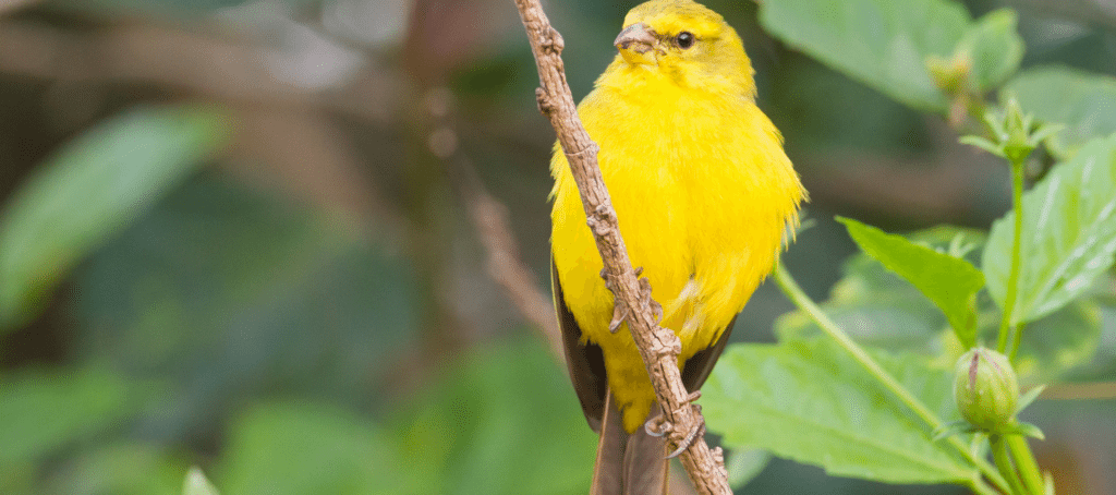 HouseCanary wins $706M after getting sued by Quicken Loans affiliate