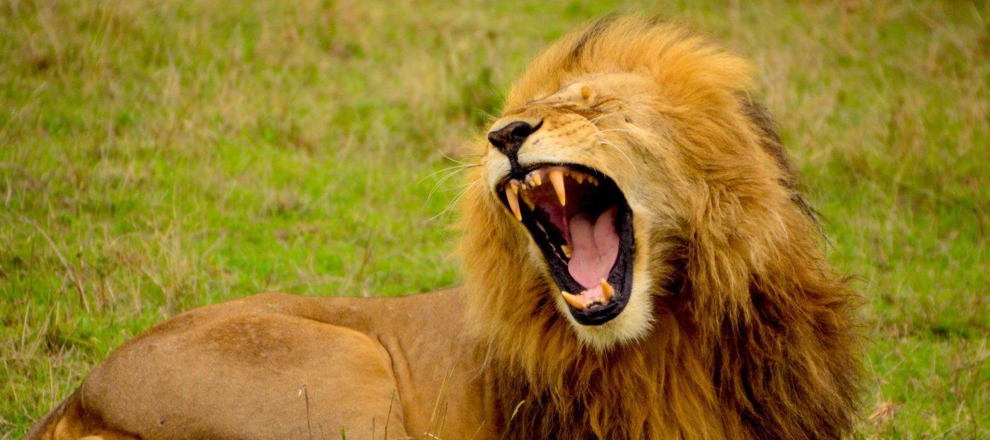 The lion roared: my talk with Gary Keller