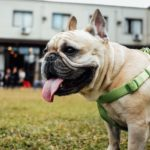 Landlord fined after denying renter's emotional support animal