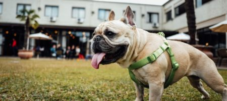 Landlord fined after denying renter's emotional support animal