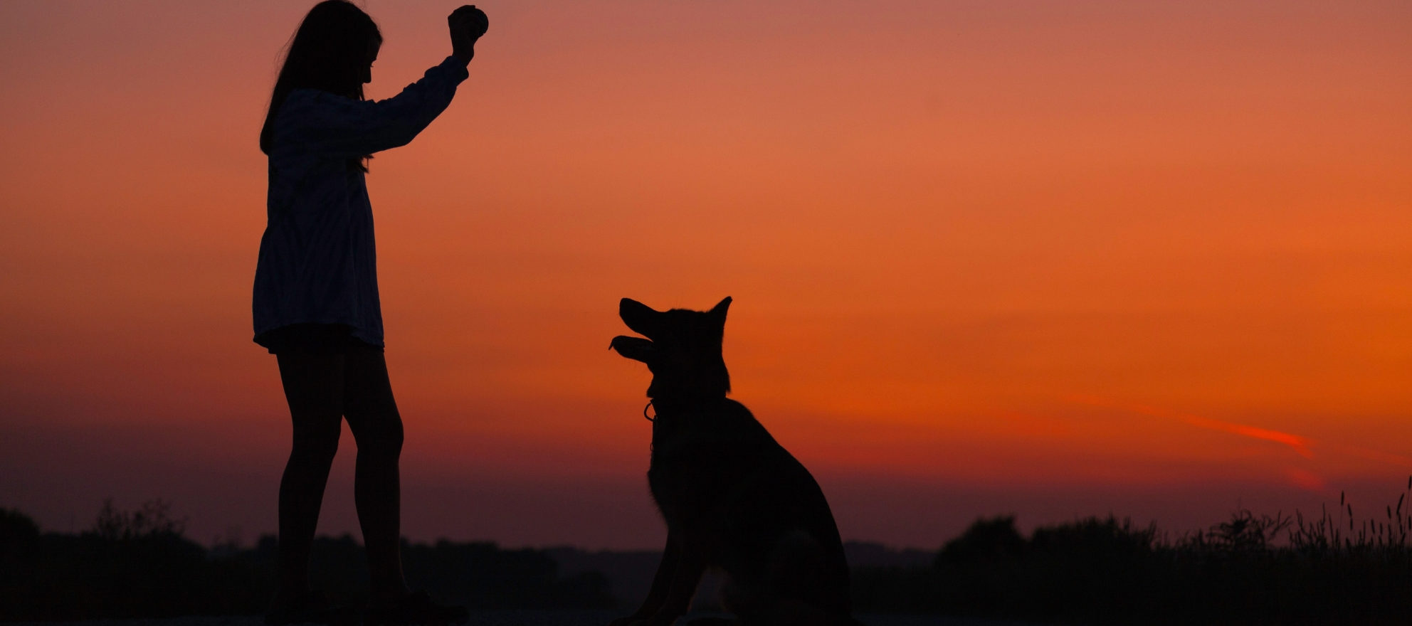 Barking up the right tree: How dogs can give your marketing a boost