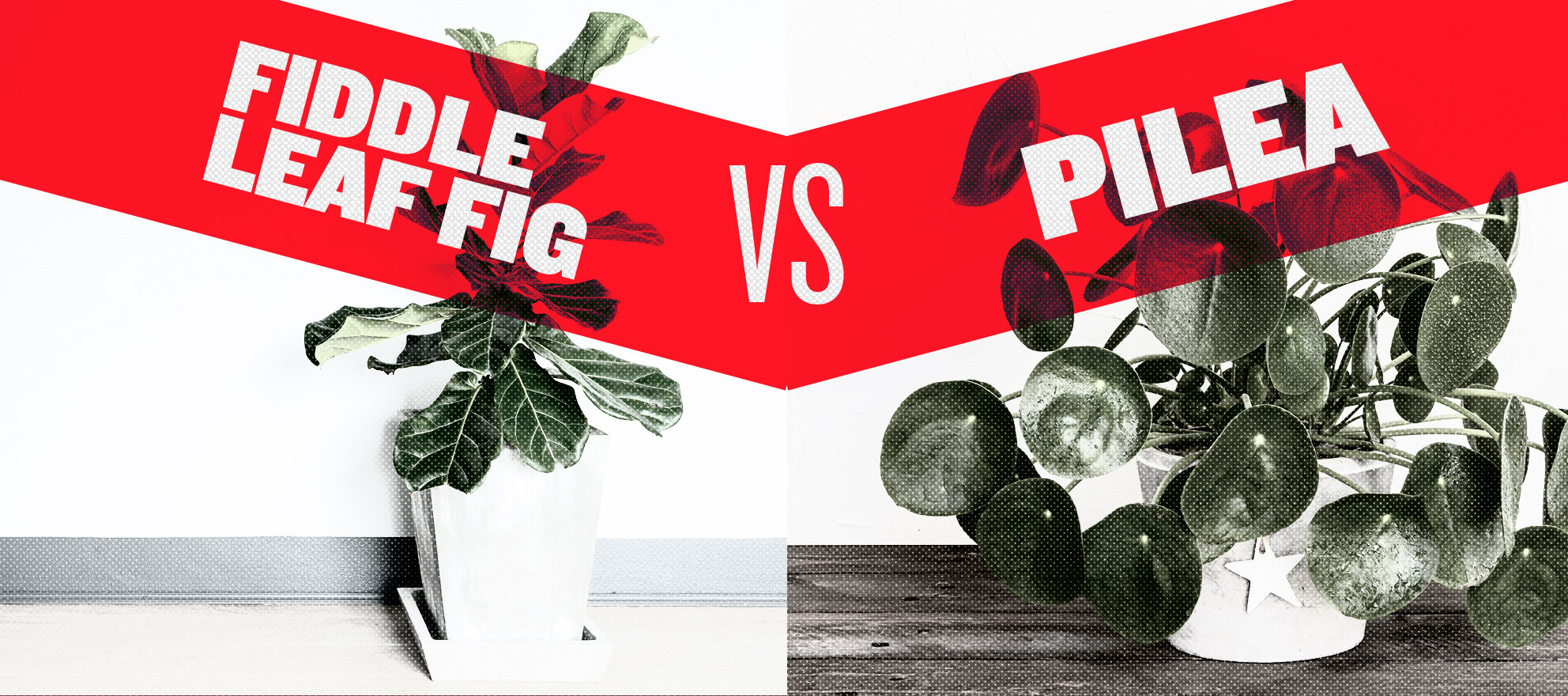 The 2 'it' houseplants sure to activate your green thumb