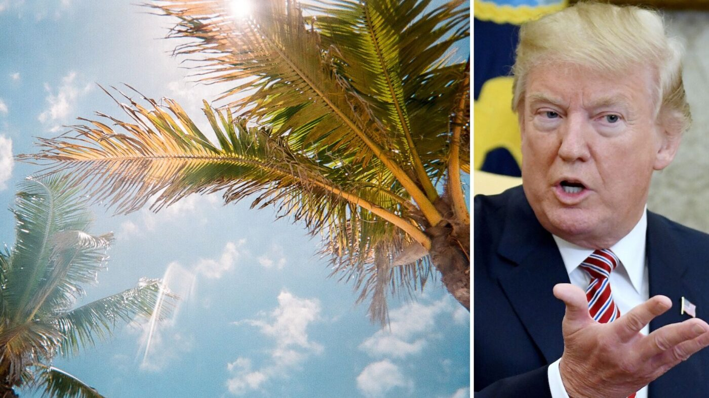 Vanilla Ice, Briny Breezes and an agent's bid to build Donald Trump's presidential library on a trailer park