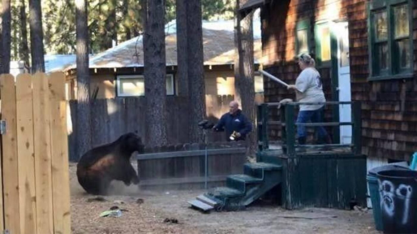 Cabin for sale — bear not included