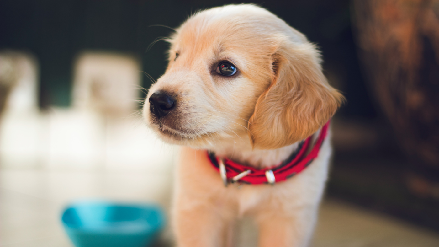 3 options for selling a home with pesky pet odors