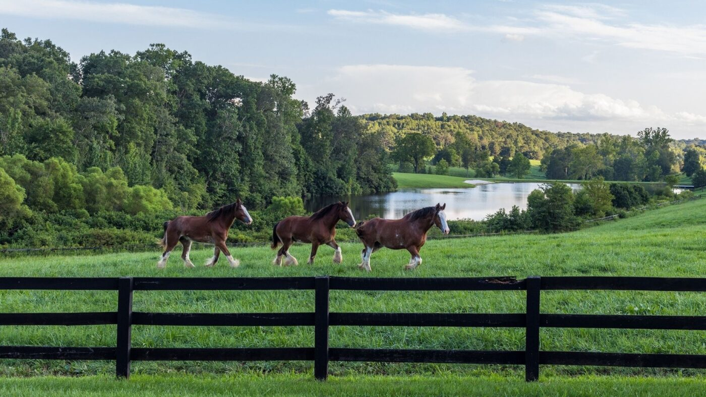 Idyllic Virginia estate with winery, brewery and famed Budweiser Clydesdales listed for $75M