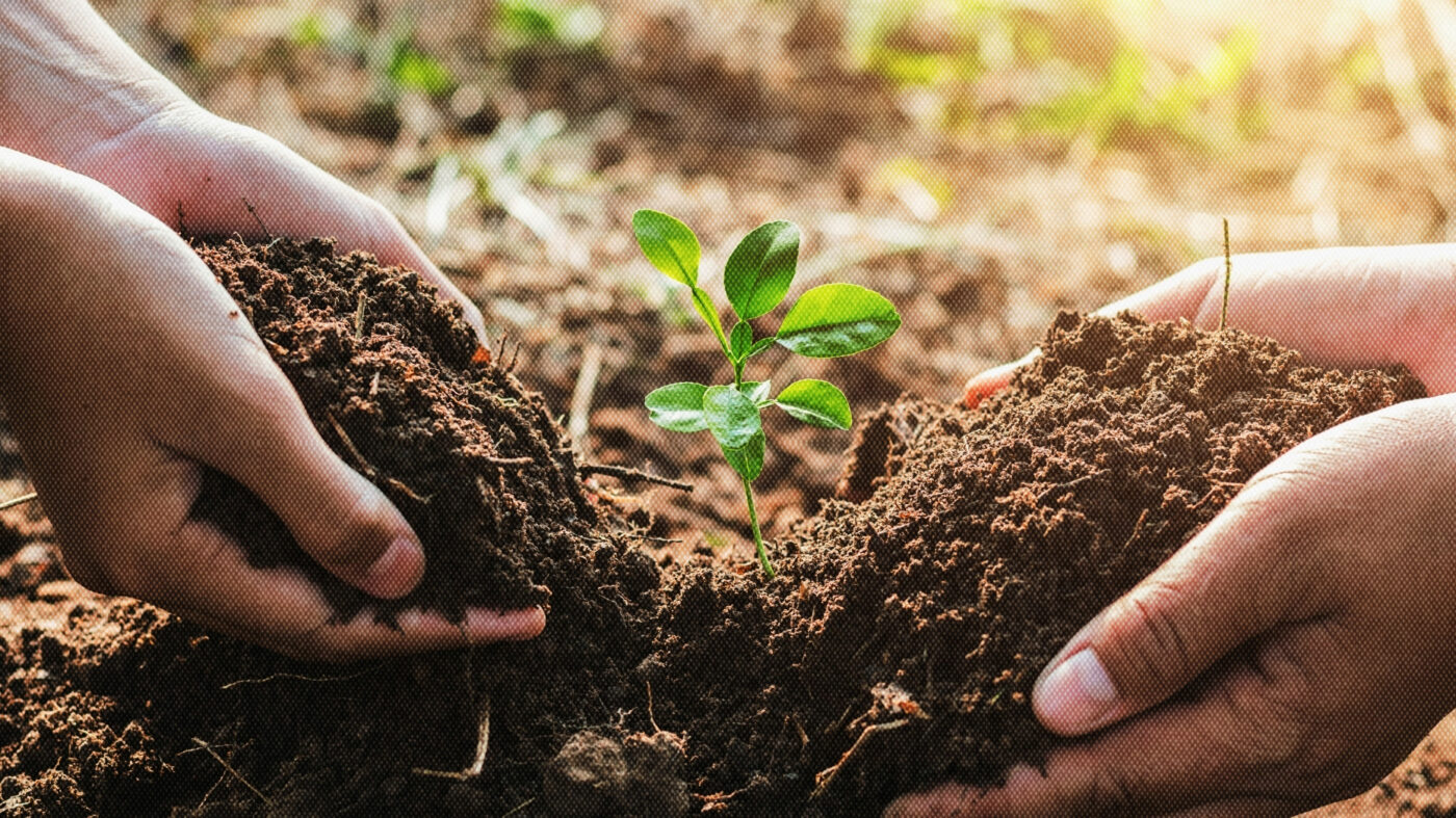 How this franchise is growing its business by planting trees