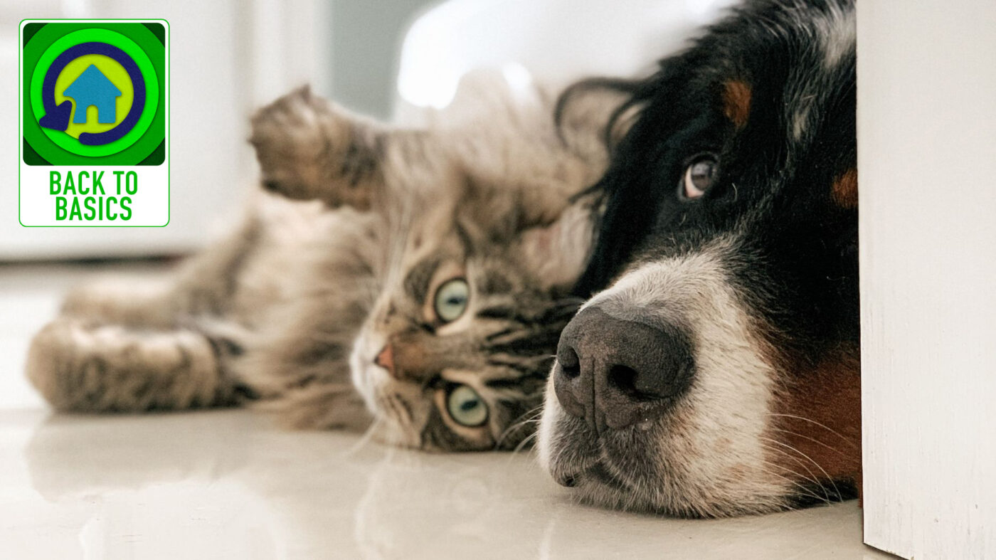 A stinky business: Getting rid of pet odors