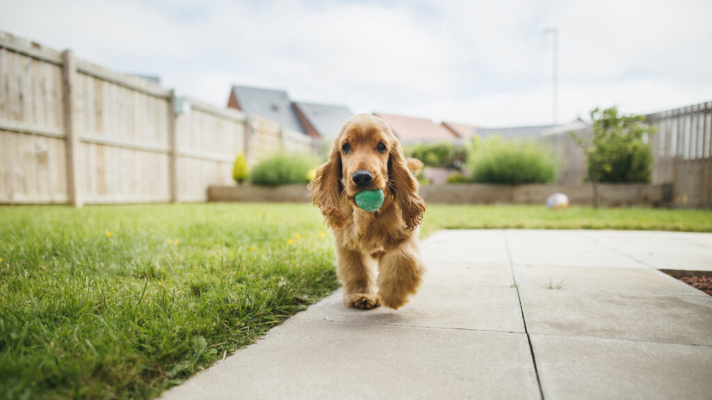 Smart Home Tech: What are the top smart devices for pets?