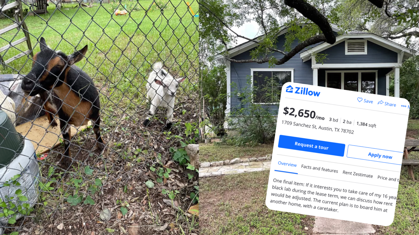 Man offers discounted rent for dog-sitting, draws internet outrage