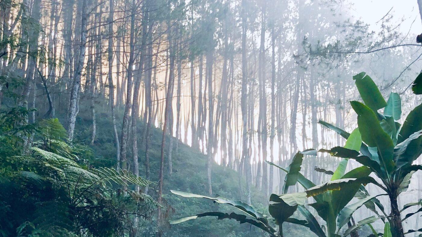 @properties to acquire referral platform Suburban Jungle