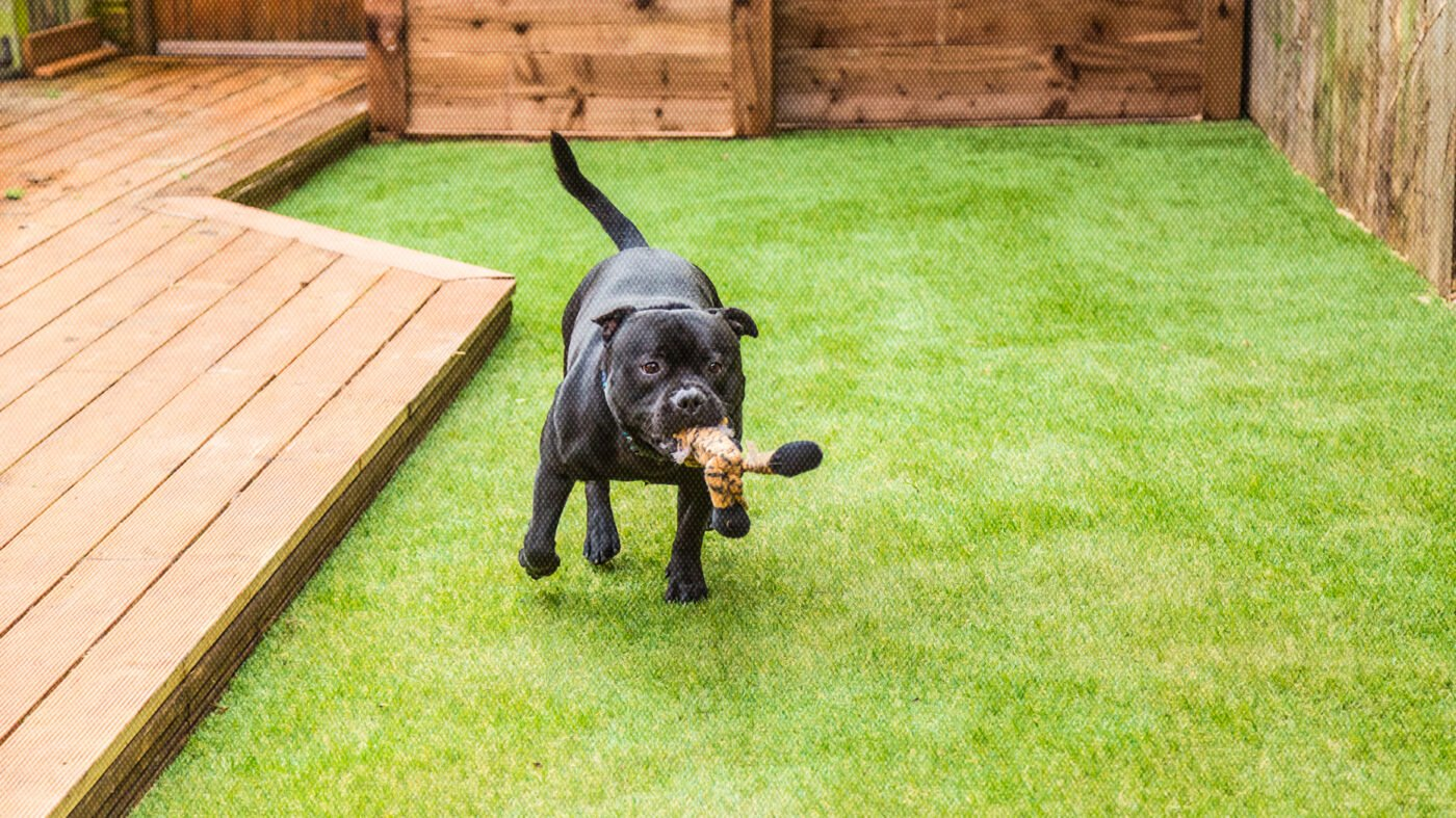 What real estate agents need to know about artificial turf
