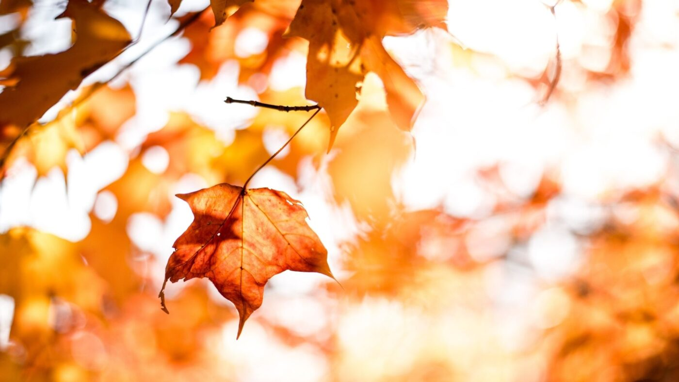 Fall housing outlook: Cooling prices, tighter inventory, less competition